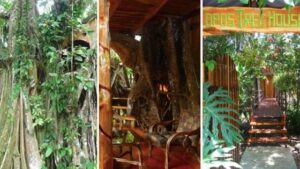 topos tree house in costa rica