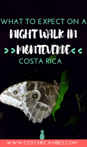 You won't believe the amazing wildlife we saw during the Monteverde night walk. Want to know all the deets about this tour? Here you go! #CostaRica #Monteverde #NightWalk
