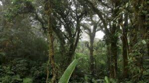 Santa Elena reserve in Monteverde