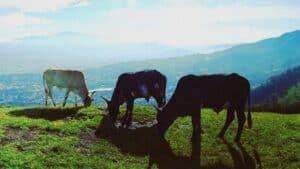 Volunteer in Costa Rica - Find Opportunities - Costa Rica Vibes