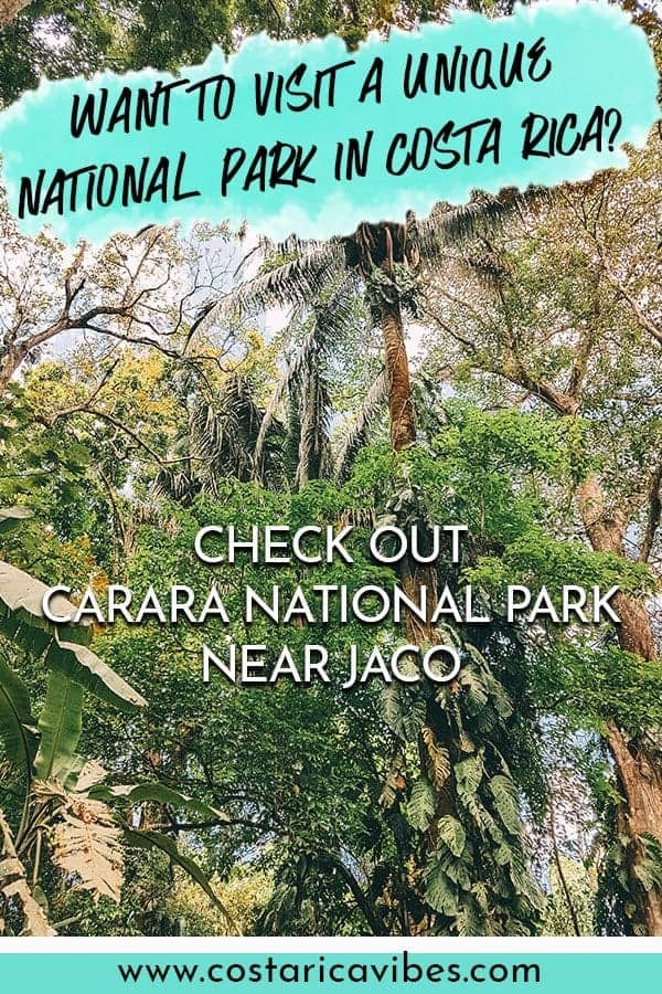 Carara National Park near Jaco Costa Rica is considered a birders paradise. Find out how to plan the perfect trip here. #CostaRica #birding #NationalPark
