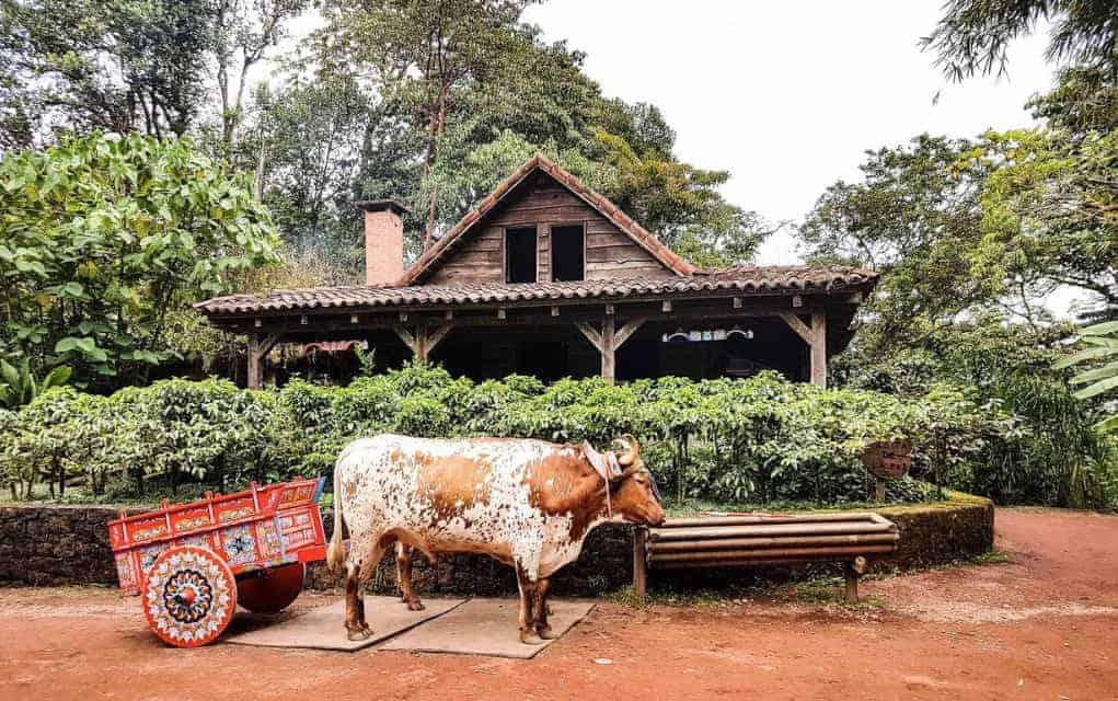 costa rica ox cart