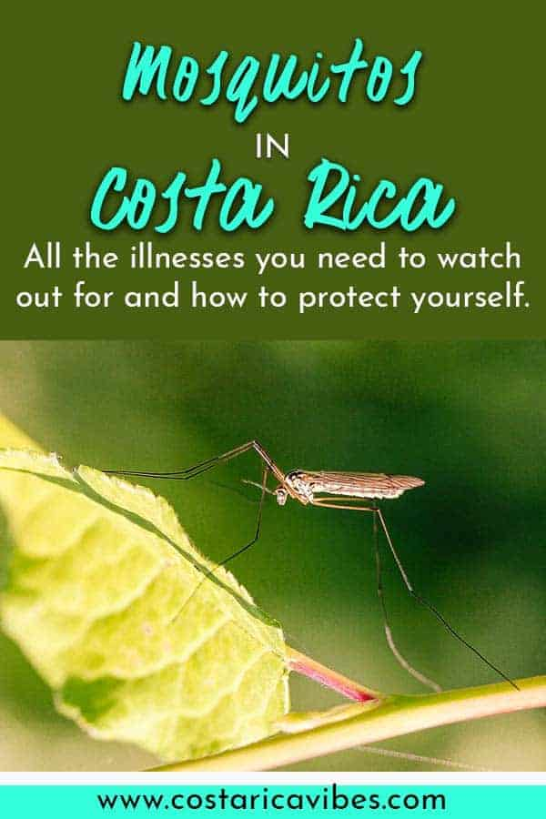 Mosquitos can be a problem in Costa Rica. Learn how to protect yourself from mosquito spread illnesses and which areas have the worst problems. #CostaRica