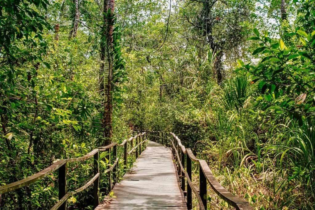 cahuita path