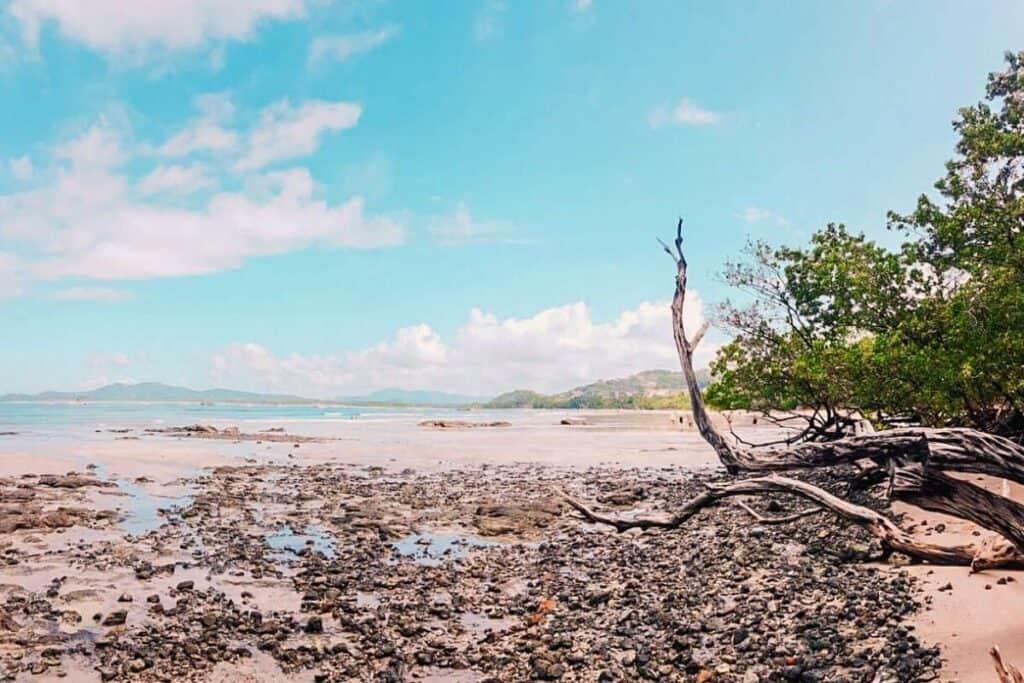 playa avellenas
