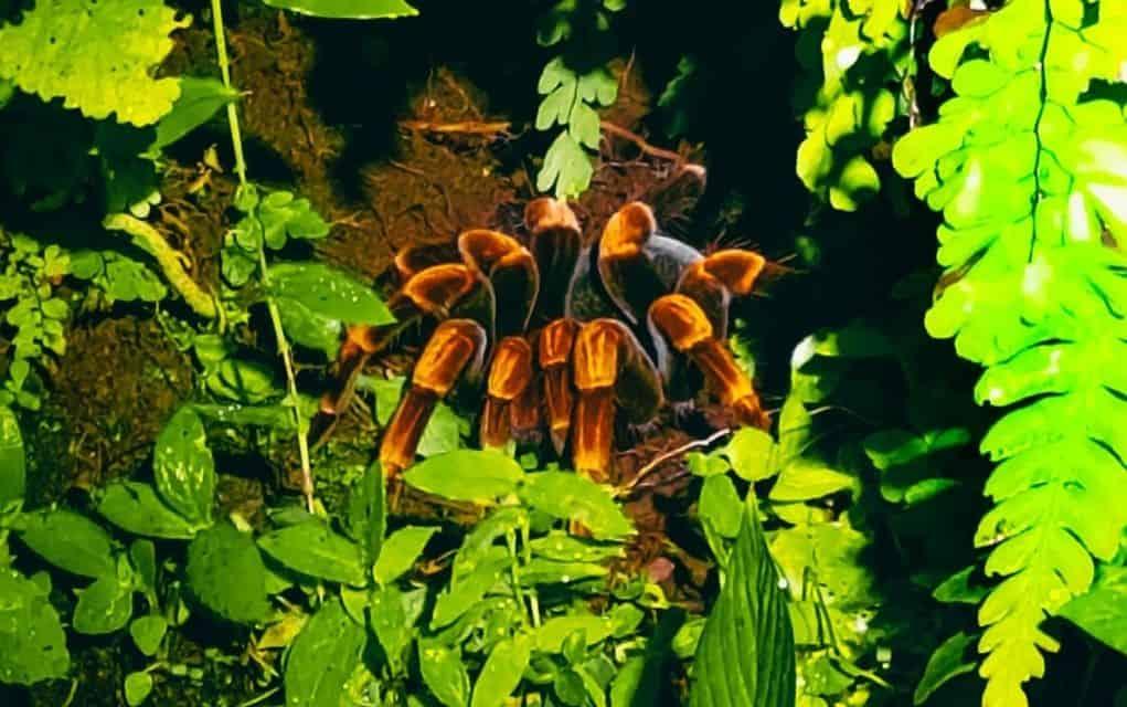 spider monteverde