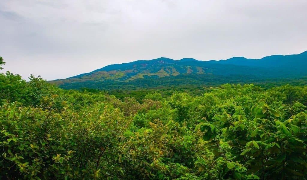 rincon view
