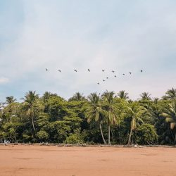 palm trees on uvita beach